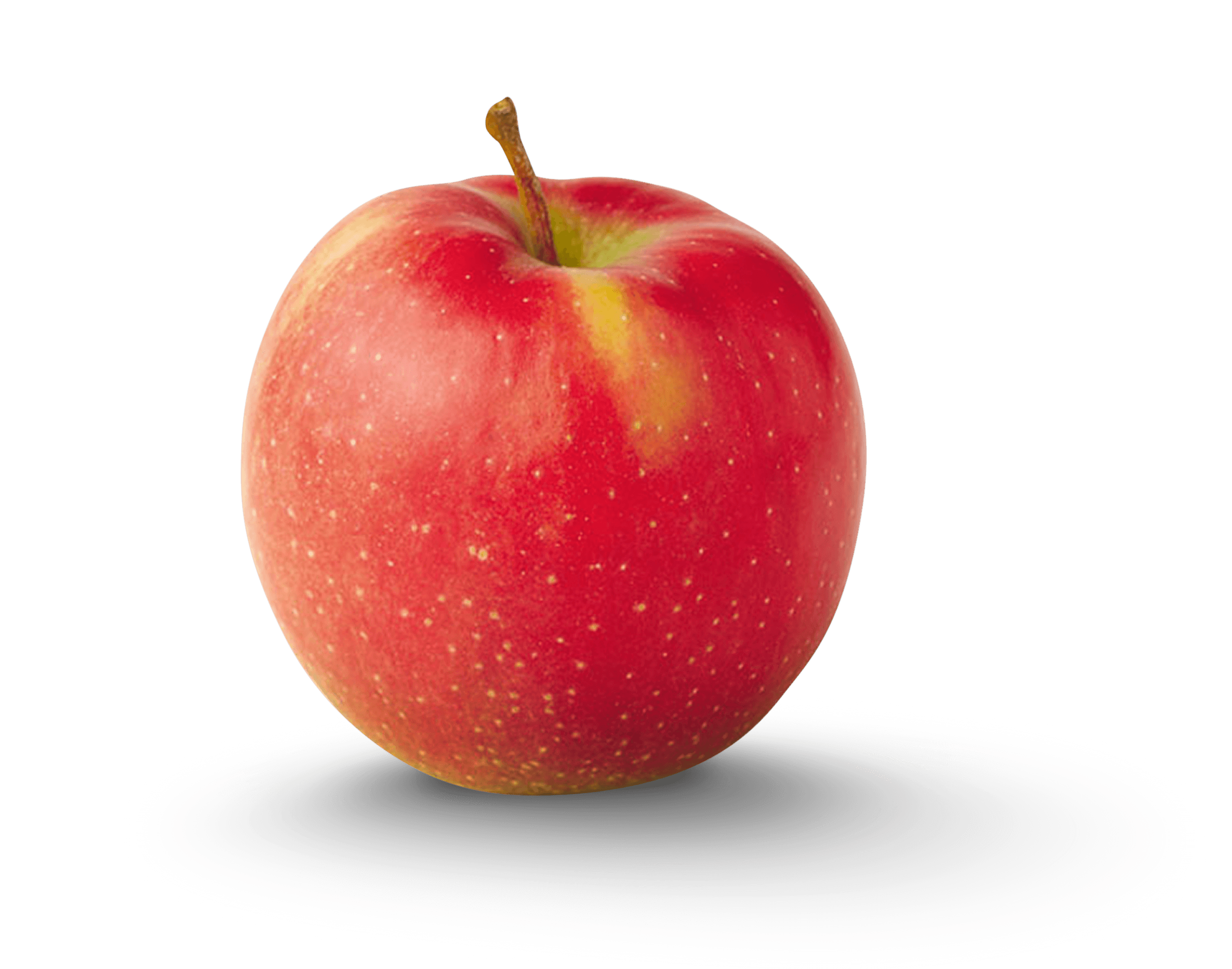 Apple Photo - Jonagold