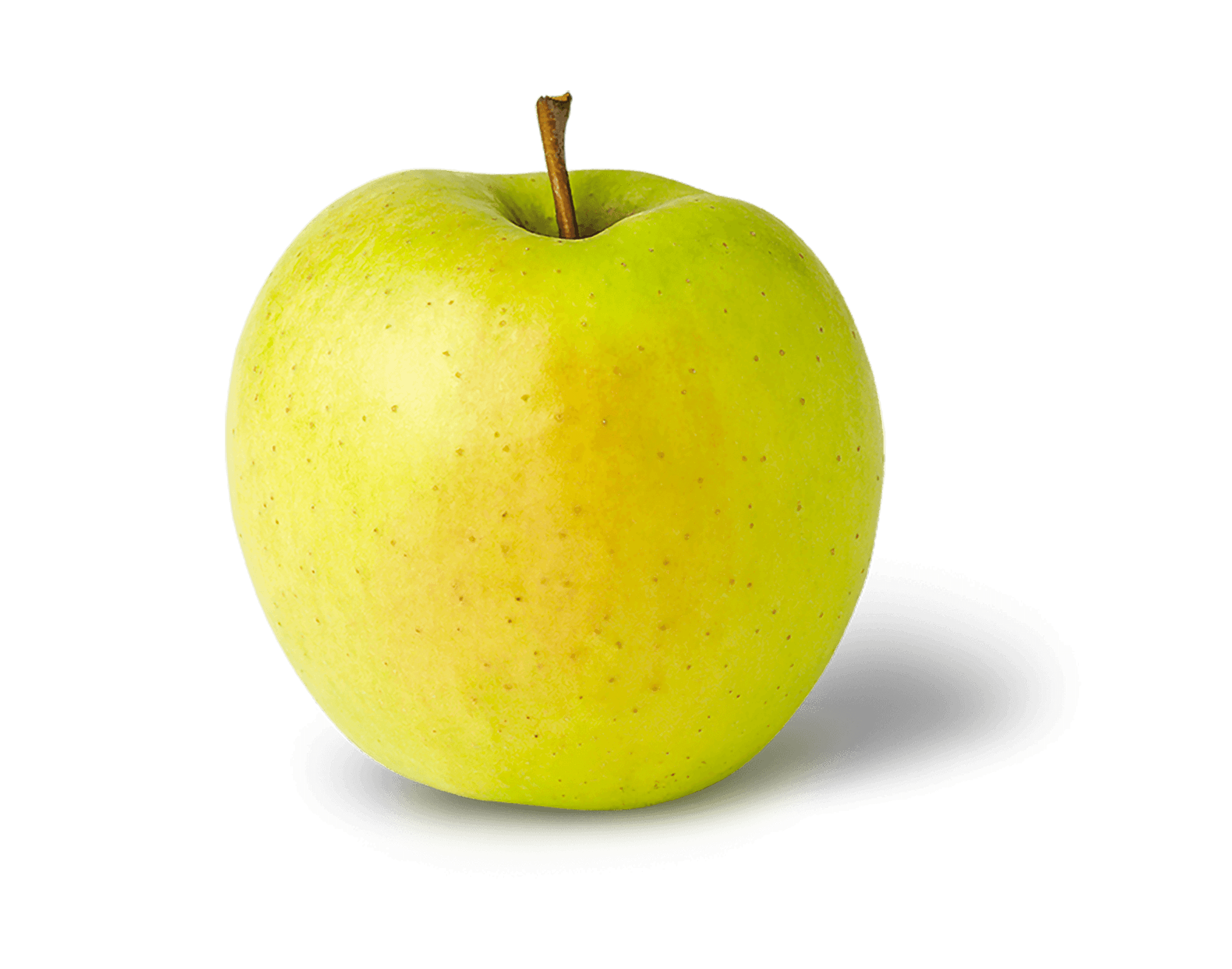 Apple Photo - Golden Delicious