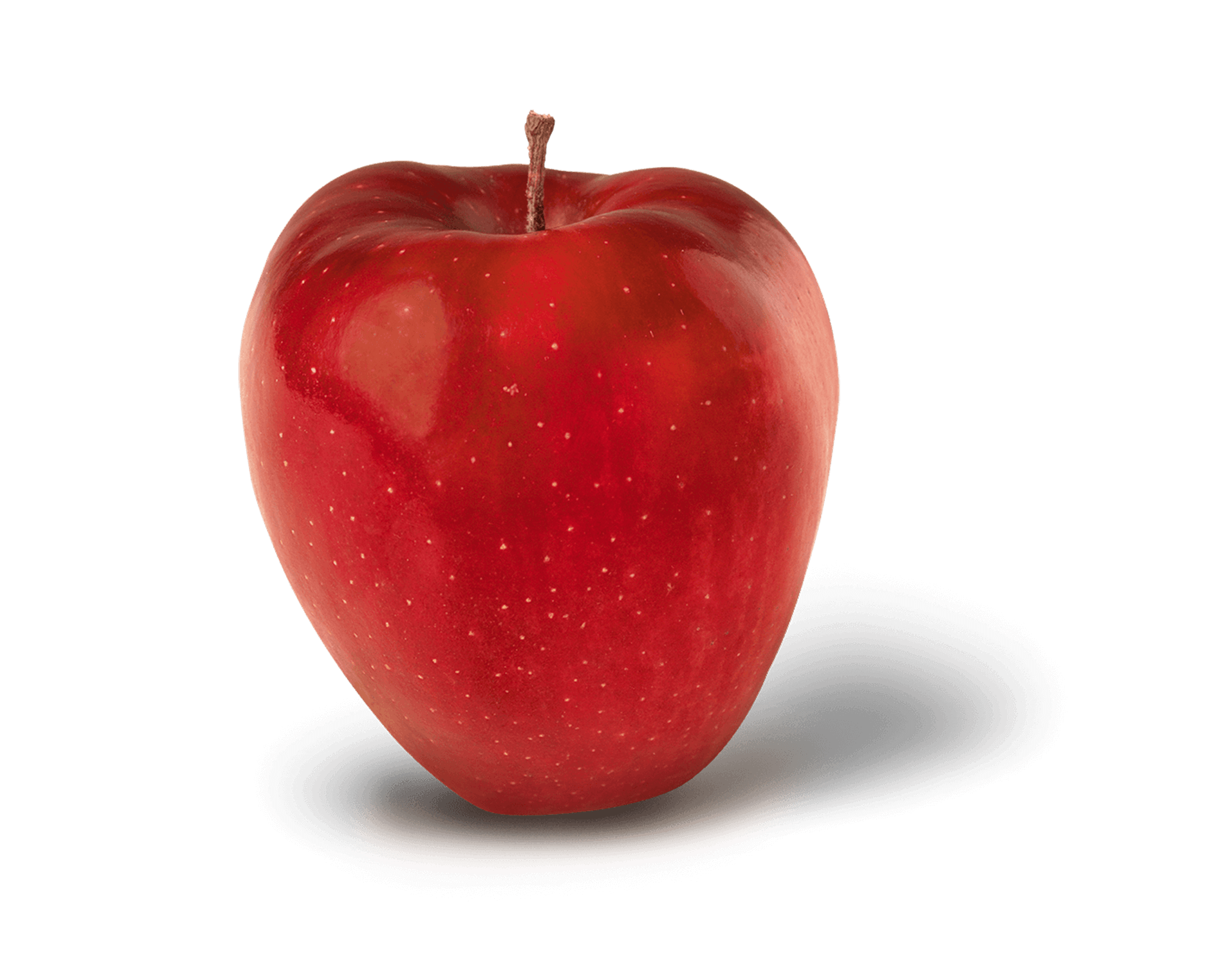 Apple Photo - Red Delicious