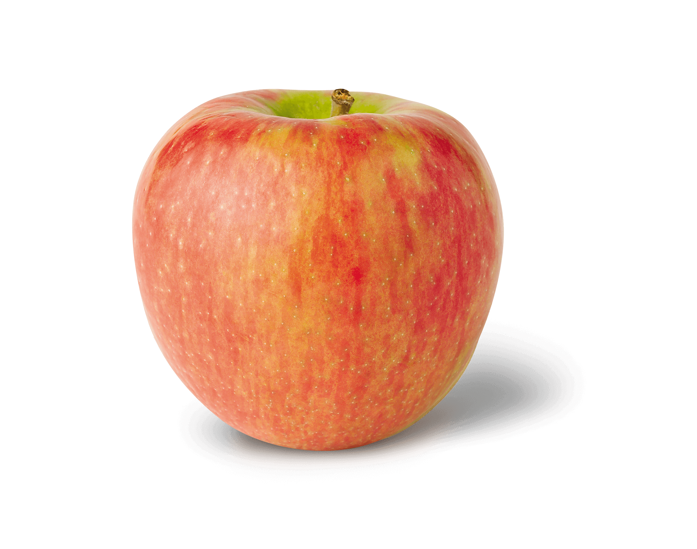 Apple Photo - Honeycrisp