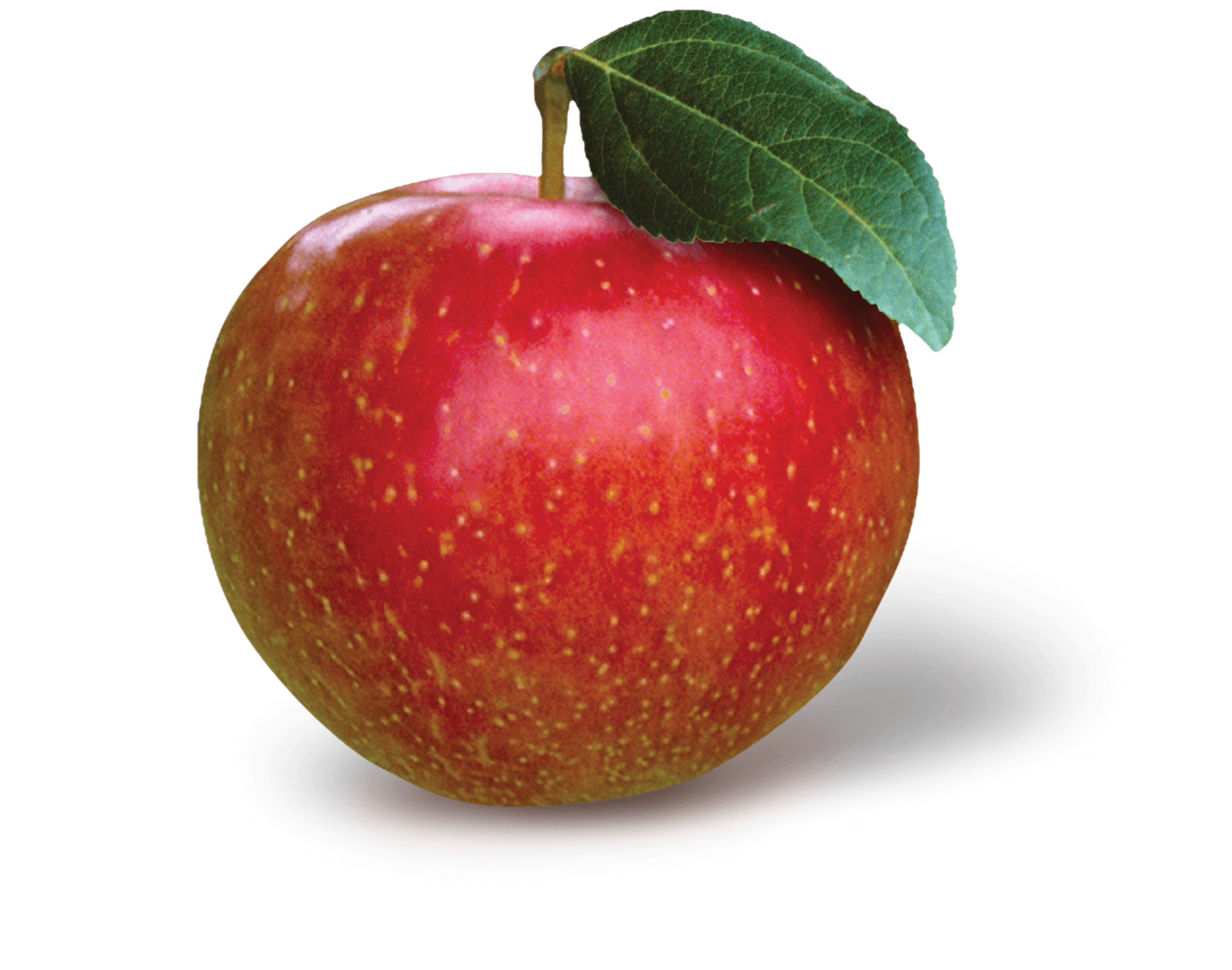 Apple Photo - SweeTango<sup>®</sup>