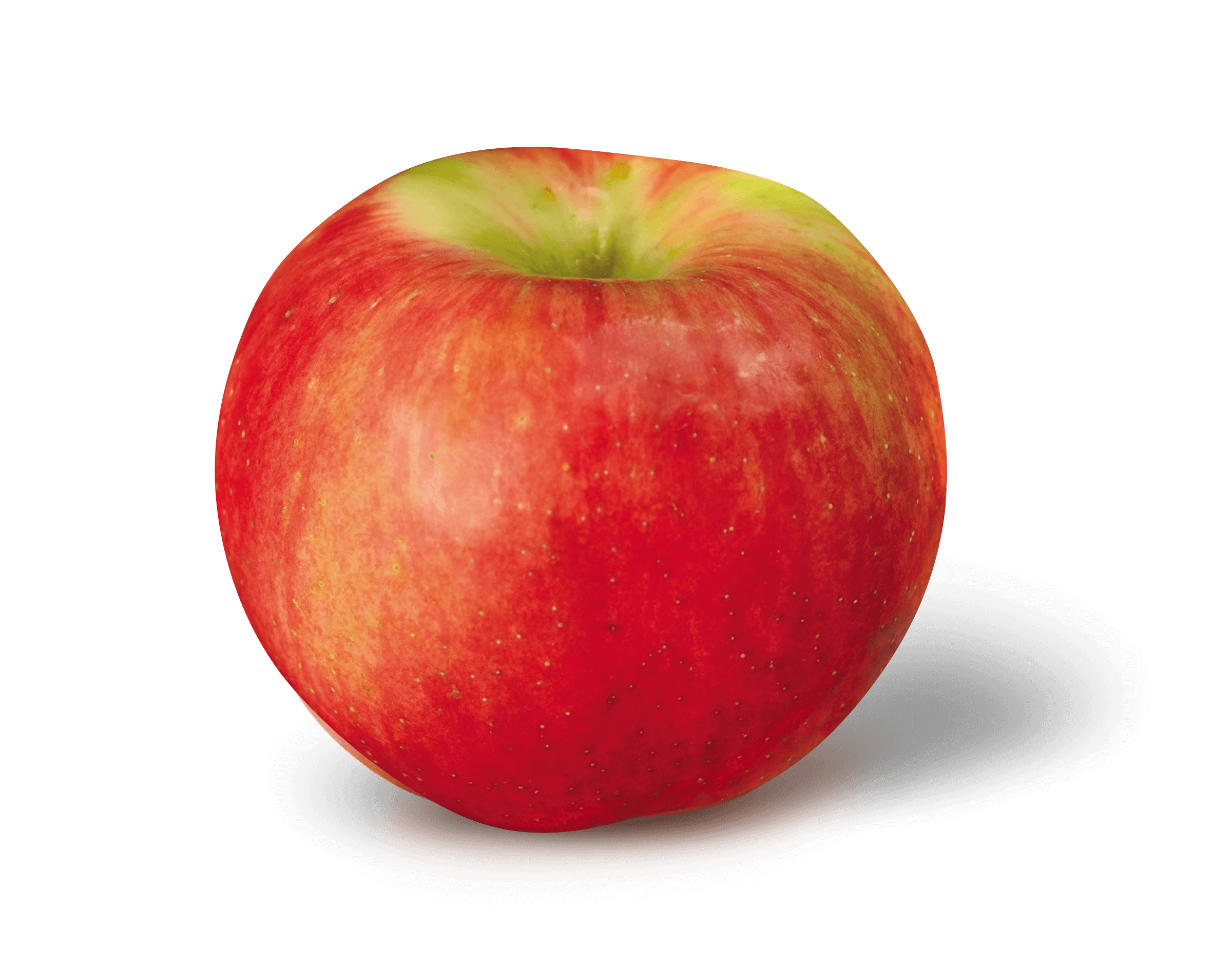 Apple Photo - Zestar!<sup>®</sup>